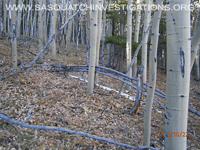 Bigfoot tree structures in Colorado 10-24-13 3
