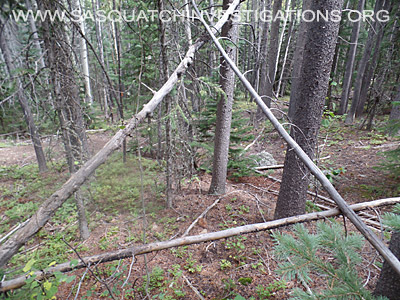 Bigfoot Tree Structures 3446
