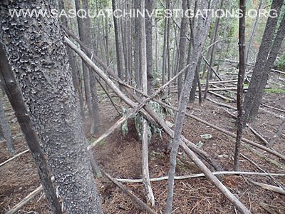 Bigfoot Tree Structures 3498
