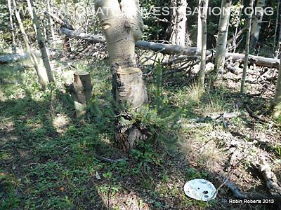 Central Colorado Bigfoot Research Field Report 4