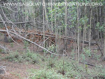 Central Colorado Bigfoot Research Field Report 8