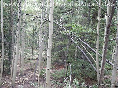 Central Colorado Bigfoot Research Field Report 9