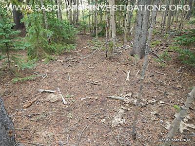 Central Colorado Bigfoot Research Field Report 10