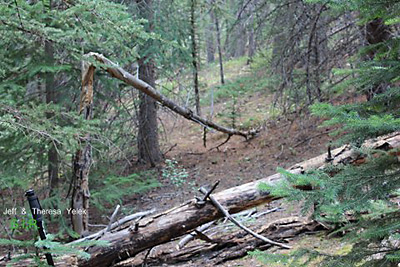 Colorado Bigfoot Field Report 07-08-13 1