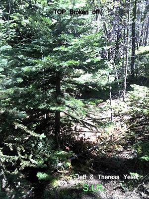 Colorado Bigfoot Field Report 07-08-13 2