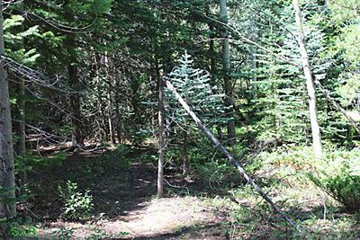 Colorado Bigfoot Field Report 07-08-13 3