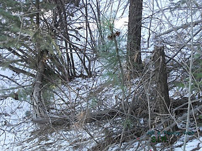 Colorado Bigfoot Research Field Report 12-31-13 5