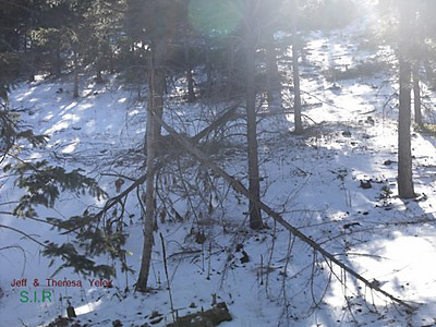 Colorado Bigfoot Research Field Report 12-31-134