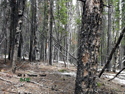 Sasquatch Investigations of the Rockies 05-04-14 Field Report 7