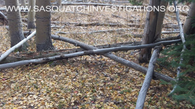 Colorado Bigfoot Research Field Report 11-24-14 1