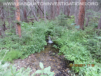 Sasquatch Investigations Of The Rockies Plant Evidence 5